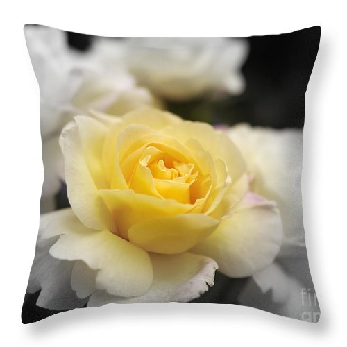 Rose Throw Pillow featuring the photograph Peace by John Chatterley