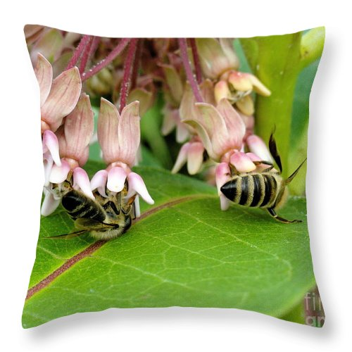 Holmesbrook Photographs Throw Pillow featuring the photograph Peaceful Gathering by Trish Hale