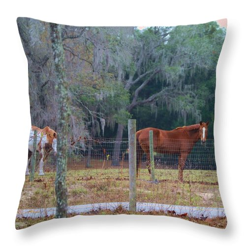 Horses Throw Pillow featuring the photograph Peaceful Pasture by Judy Hall-Folde