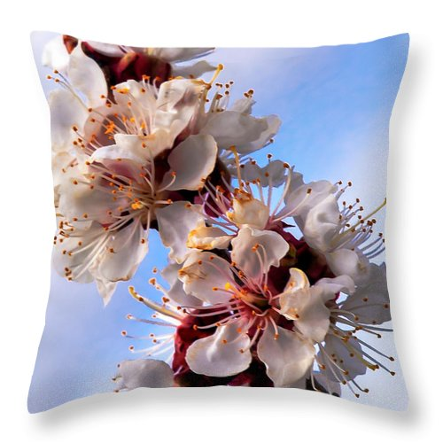 Flowers Throw Pillow featuring the photograph Peach Blossoms by Robert Bales