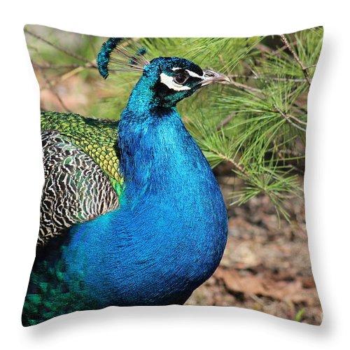 Peacock Throw Pillow featuring the photograph Peacock by Stephanie Kripa