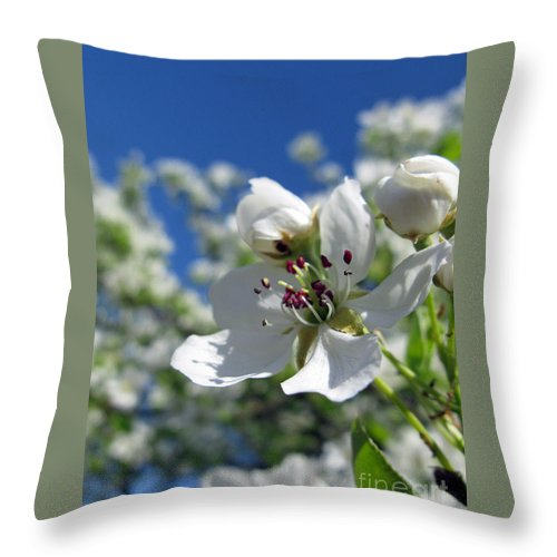 Nature Throw Pillow featuring the photograph Pear In Bloom by Ausra Huntington nee Paulauskaite