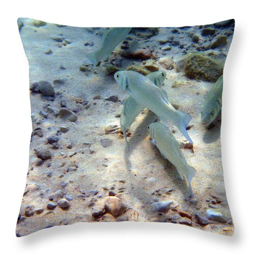 Arenal D'en Castell Throw Pillow featuring the photograph Pebbles And Fins by Rod Johnson