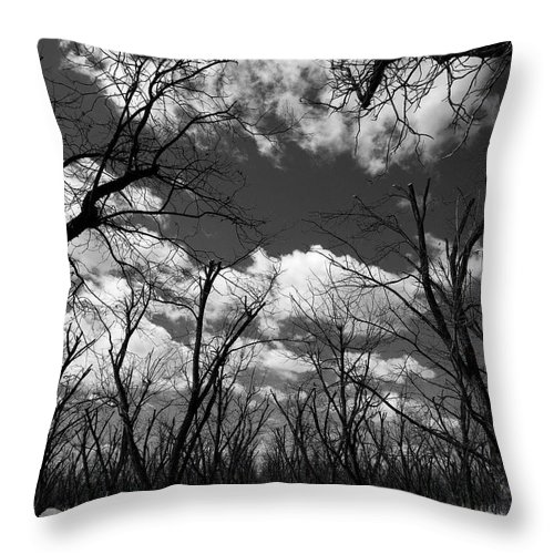 New Mexico Throw Pillow featuring the photograph Pecan Trees by Sean Wray