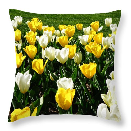 Tulip Throw Pillow featuring the photograph Peddler's Tulip 2012 3 by M Brandl