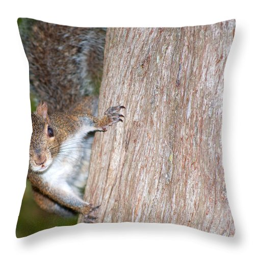 Wildlife Throw Pillow featuring the photograph Peek A Boo by Kenneth Albin
