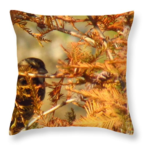 Wren Throw Pillow featuring the photograph Peep by Rrrose Pix