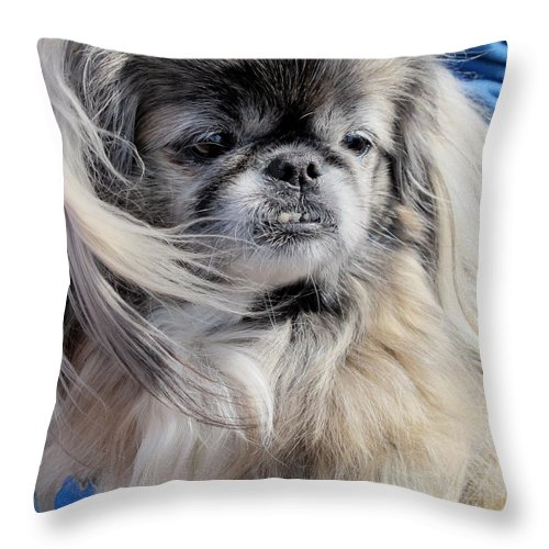 Dogs Throw Pillow featuring the photograph Pekingese Portrait by Valia Bradshaw