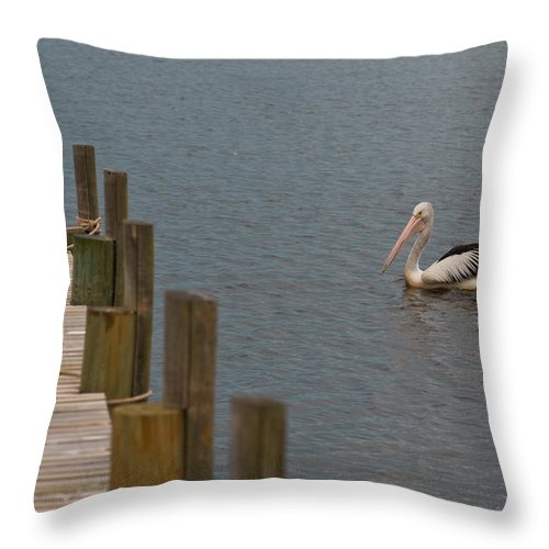 Anchor Throw Pillow featuring the photograph Pelican In The Water Next To A Timber Landing Pier by U Schade
