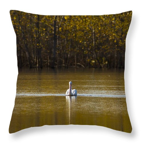 Pond Throw Pillow featuring the photograph Pelican On Golden Pond by Pam Holdsworth