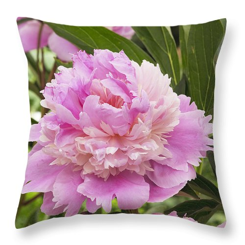 Vp Throw Pillow featuring the photograph Peony Paeonia Sp Mme Emile Debatene by VisionsPictures