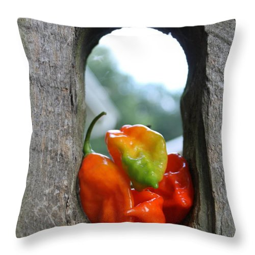 Pepper Throw Pillow featuring the photograph Peppered Fence by Lauri Novak