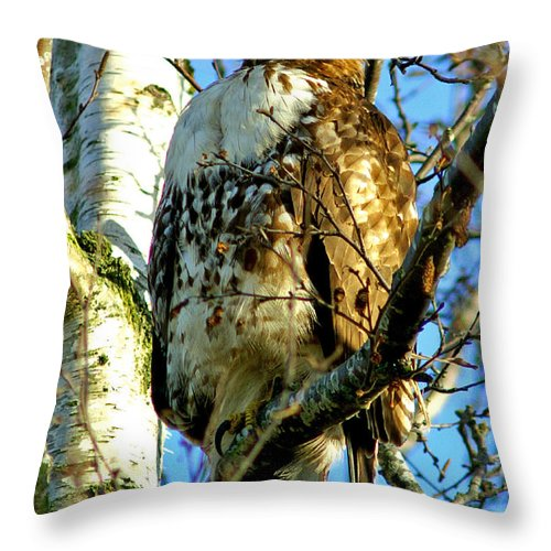Hawks Throw Pillow featuring the photograph Perched Hawk by Randy Harris