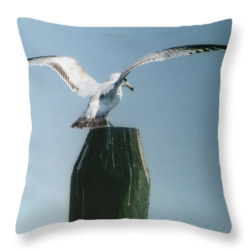 Seagull Throw Pillow featuring the photograph Perching Seagull by Barry Doherty
