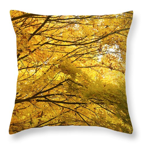 Tree Throw Pillow featuring the photograph Perfect Autumn by David Resnikoff