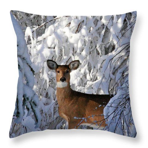 Deer Throw Pillow featuring the photograph Perfect Pose by Lloyd Alexander