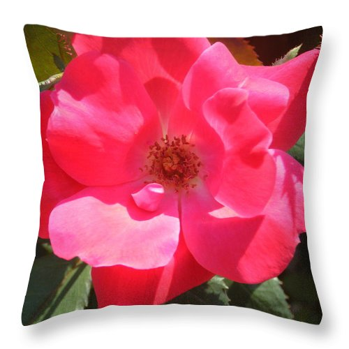 Rose Throw Pillow featuring the photograph Perfection by April Patterson