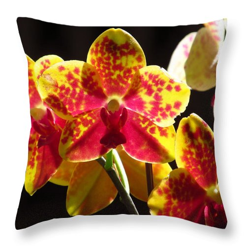 Orchid Throw Pillow featuring the photograph Phalaenopsis Orchids by Alfred Ng