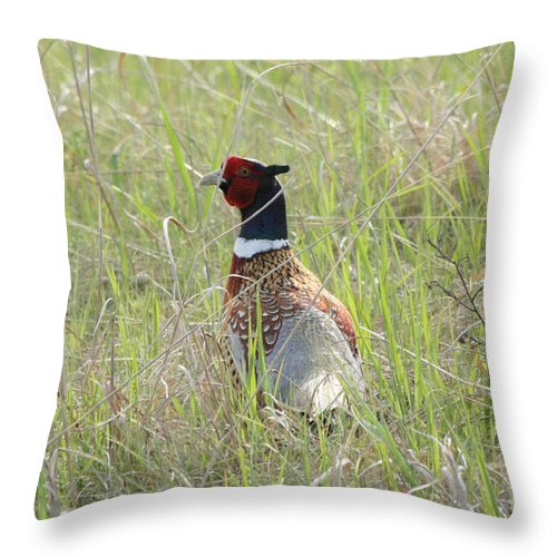 Pheasant Throw Pillow featuring the photograph Pheasant In The Grass by Lori Tordsen