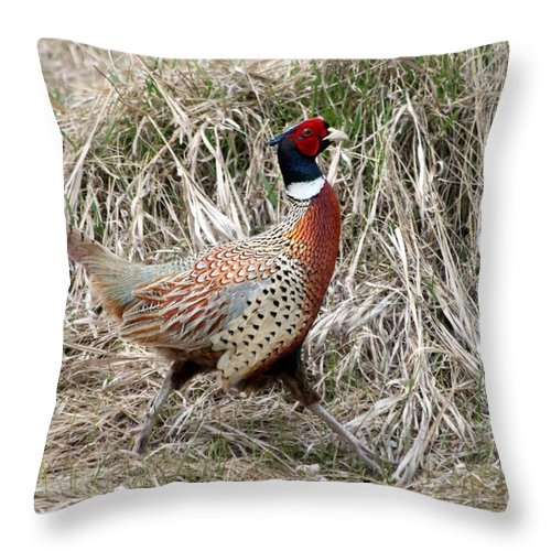Rooster Throw Pillow featuring the photograph Pheasant Walking by Lori Tordsen