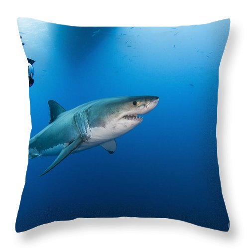 Carcharodon Carcharias Throw Pillow featuring the photograph Photographer Taking A Picture Of A Male by Todd Winner