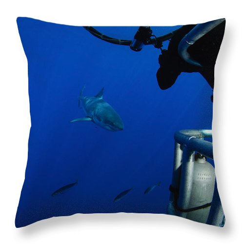 Carcharodon Carcharias Throw Pillow featuring the photograph Photographer Taking A Picture by Todd Winner