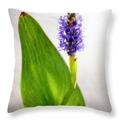 Art Throw Pillow featuring the photograph Pickerel Blue Pontederia Cordata by Charles Dobbs