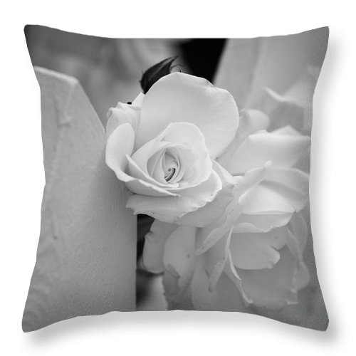 Black & White Throw Pillow featuring the photograph Picket Rose by Peter Tellone