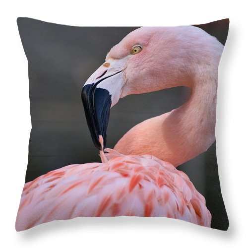 Flamingo Throw Pillow featuring the photograph Picky by Greg Nyquist