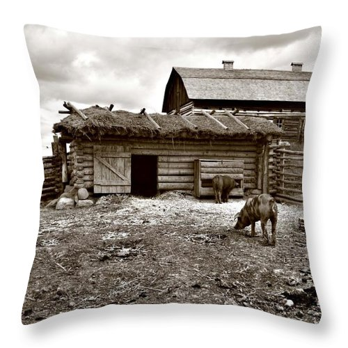 Throw Pillow featuring the photograph Pig Pen by The Artist Project