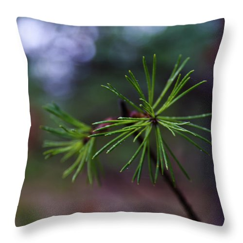 Forest Throw Pillow featuring the photograph Pine Tree by Michael Goyberg