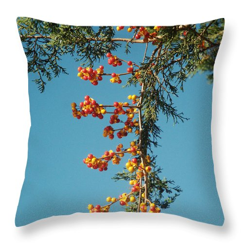 Autumn Throw Pillow featuring the photograph Pine Tree With Berries by Barry Doherty