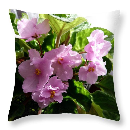 Pink Throw Pillow featuring the photograph Pink African Violets by Will Borden