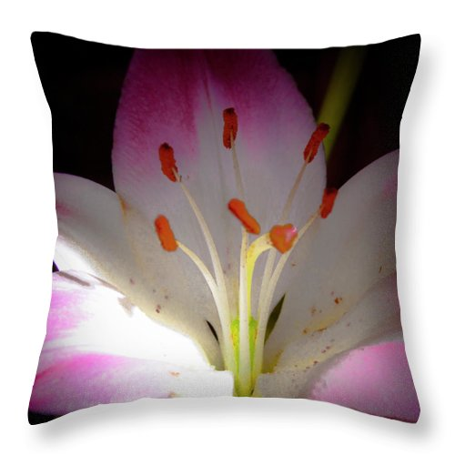 Lily Throw Pillow featuring the photograph Pink And White Lily by David Patterson