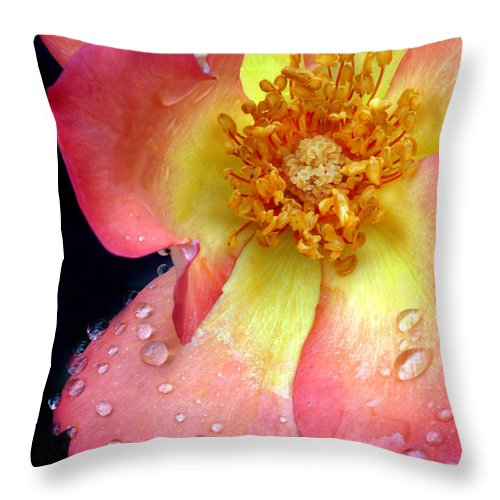 Rose Throw Pillow featuring the photograph Pink And Yellow Rose by Dave Mills