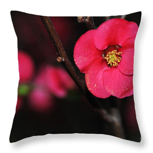 Photography Throw Pillow featuring the photograph Pink Blossom In The Evening by Kaye Menner