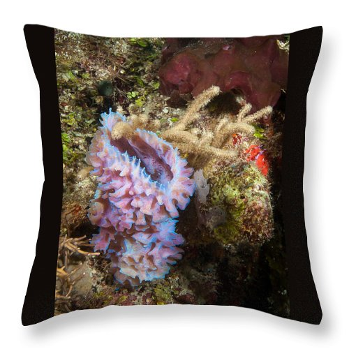 Belize Throw Pillow featuring the photograph Pink Corner Vase by Jean Noren