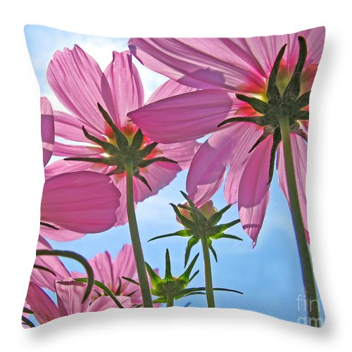 Flowers Throw Pillow featuring the photograph Pink Cosmos by Jack Schultz