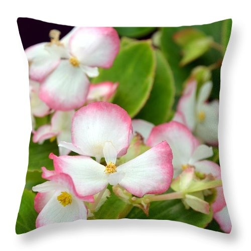 Pink Throw Pillow featuring the photograph Pink Dipped by Maria Urso