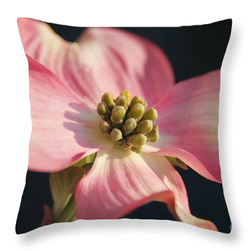 Dogwood Throw Pillow featuring the photograph Pink Dogwood by Jack Schultz