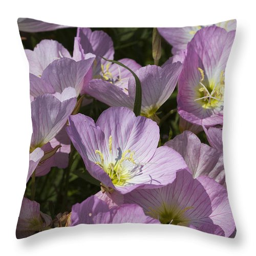 Oenothera Speciosa Throw Pillow featuring the photograph Pink Evening Primrose Wildflowers by Kathy Clark