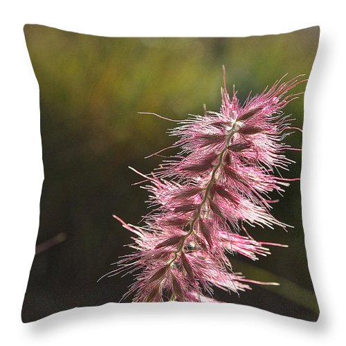 Landscape Throw Pillow featuring the photograph Pink Fuzzy by Susan Herber
