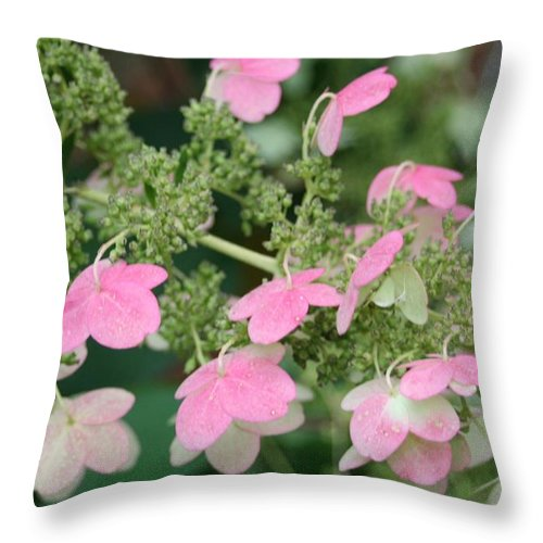 Pink Lace Throw Pillow featuring the photograph Pink Lace by Barbara S Nickerson