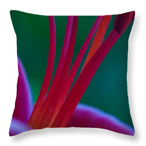 Lily Flower Throw Pillow featuring the photograph Pink Lily by Dana Kern