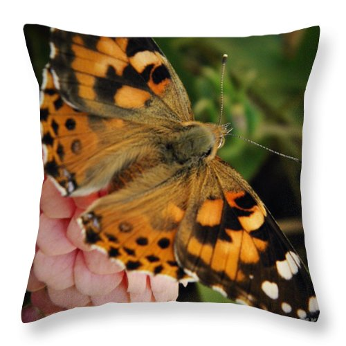 Butterfly Throw Pillow featuring the photograph Pink N Orange by Chris Berry
