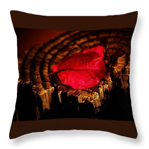 Petal Throw Pillow featuring the photograph Pink Petal by Jessica Shelton