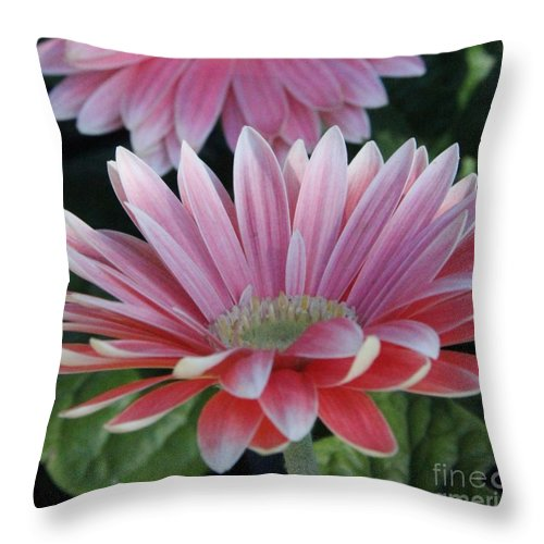 Throw Pillow featuring the photograph Pink Petals by Diane Greco-Lesser