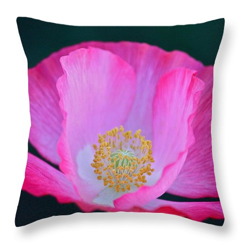 Flowers Throw Pillow featuring the photograph Pink Poppy 2 by Diana Hatcher