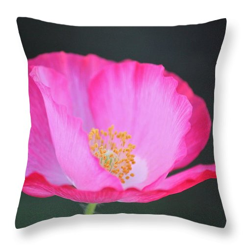 Flowers Throw Pillow featuring the photograph Pink Poppy 3 by Diana Hatcher