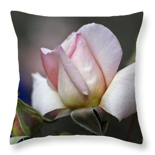 Rose Throw Pillow featuring the photograph Pink Rose Bloom by Heiko Koehrer-Wagner